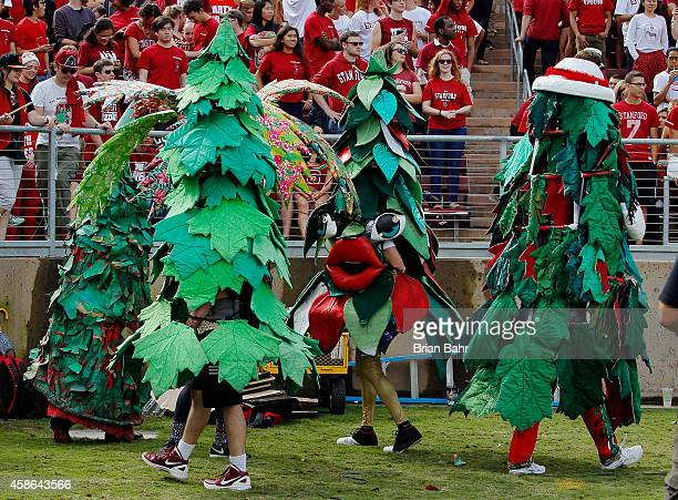 The Stanford trees root on the Stanford Cardinal against the Oregon State Beavers in the first quarter on October 25 2014 at Stanford Stadium in Palo...