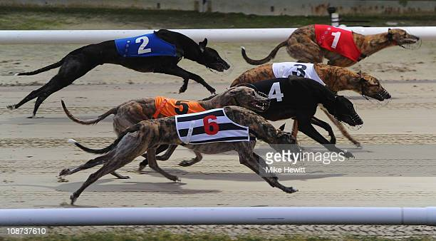 The start of the seventh race at the Brighton and Hove Greyhound Stadium on February 2 2011 in Brighton England
