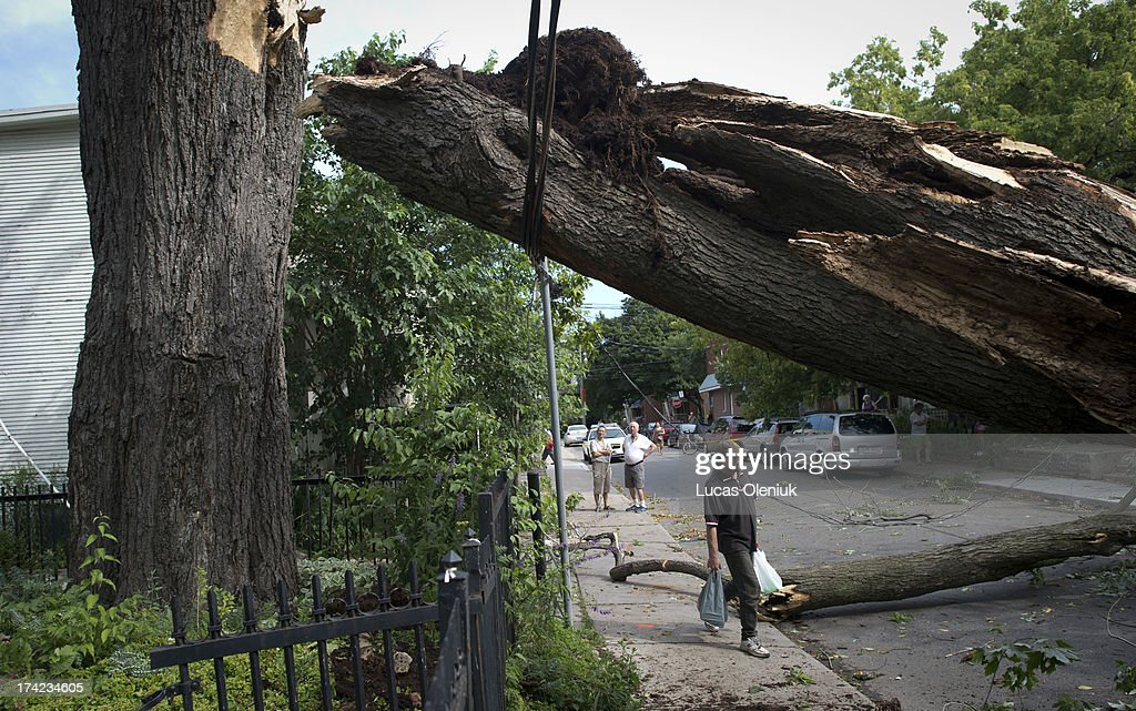 The storied silver maple that fell during Friday night's storm continued to block Laing St. Saturday morning. A falling leaf from the tree inspired Alexander Muir's 'The Maple Leaf Forever' poem in 1867.