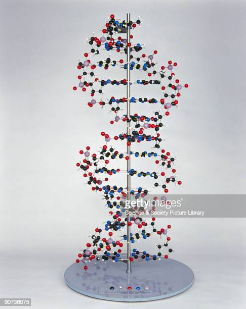 The structure of DNA was discovered by Francis Crick and James Dewey Watson whilst working in the Medical Research Council Unit at the Cavendish...