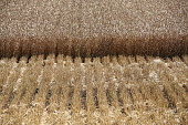 The stubble from harvested wheat sits beside uncut wheat during the summer harvest on a farm operated by Kuban Agroholding a unit of Basic Element Co...