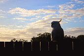The Sulphur-crested Cockatoo  portrait single Australian animal bird
