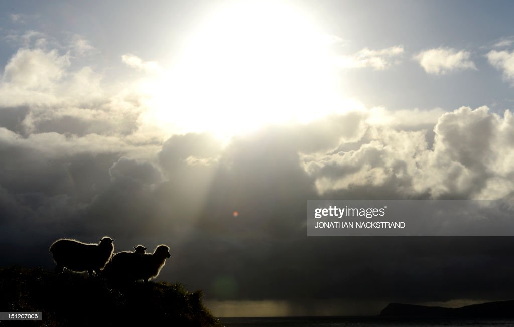 The sun appears behind sheep at the Kirkjubour village on the Streymoy Island on October 16, 2012, Faroe Islands. The Faroe Islands are known for its fishing and sheep farming as the main industries. AFP PHOTO / JONATHAN NACKSTRAND