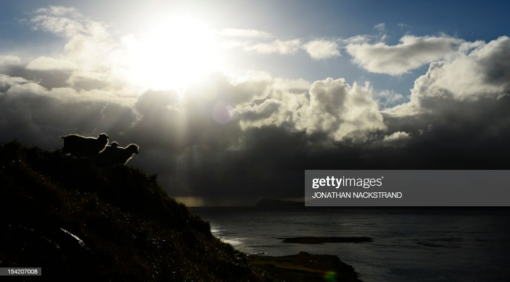 The sun appears behind sheep at the Kirkjubour village on the Streymoy Island on October 16, 2012, Faroe Islands. The Faroe Islands are known for its fishing and sheep farming as the main industries.