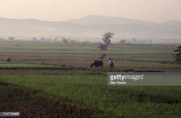 CASBARAN LUZON PANGASINAN PHILIPPINES The sun rises over a patchwork of rice fields near the village of Casbaran in central Luzon in the Philippines...