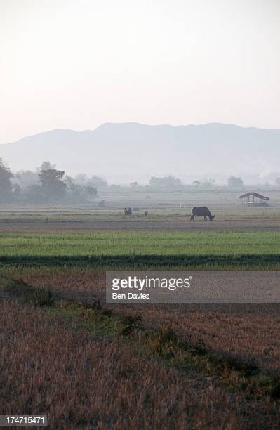 The sun rises over a patchwork of rice fields near the village of Casbaran in Central Luzon the Philippines Framed by the Grand Central Cordillera...