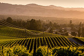 The sun rises over a Russian River Valley pinot noir vineyard on May 31 near Santa Rosa California Warm summer temperatures and a dry spring...