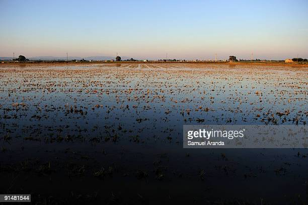 The sun rises over rice fields in the Ebro Delta on October 6 2009 in Aposta near Valencia Spain The Ebro Delta is most known for it's shortgrain...