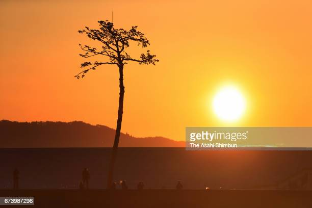The sun rises over socalled 'Miracle Pine Tree' on the sixth anniversary of the Great East Japan Earthquake and following tsunami on March 11 2017 in...