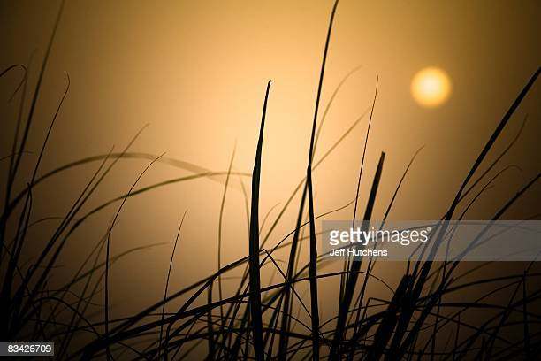 The sun rises over tall grass on the shores of polluted and rapidly diminishing Lake Chad on July 10 2007 around Lake Chad Chad