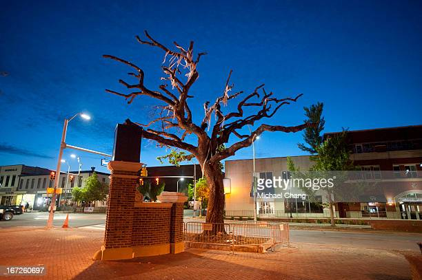 The sun rises the morning that the live oak trees will be cut down by crews from the Asplundh tree service on April 23 2013 at Toomer's Corner in...
