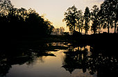 The sun setting in Kanha National Park part of Project Tiger in Madhya Pradesh India In the 1930s Kanha area was divided into two sanctuaries Hallon...