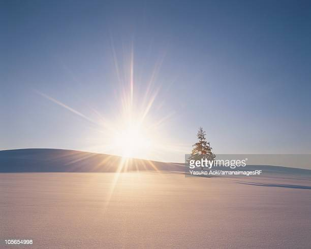 The Sun Setting Over a Single Tree in a Snowy Field. Biei, Hokkaido, Japan