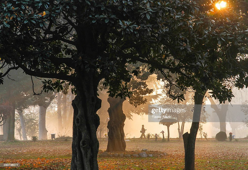 The sun shines through the trees during the autumn season on November 20, 2013 in Srinagar, the summer capital of Indian administered Kashmir, India. Trees are changing colour and the days are becoming shorter as winter approaches in Kashmir.