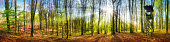 The sun shining brightly in a forest at springtime, wide panorama with rays of light and a hunting lookout