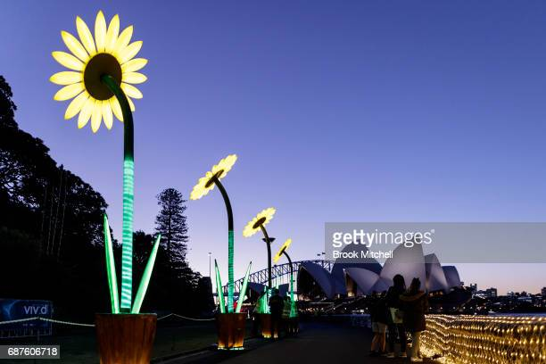 The Sunflowers installation is lit ahead of Vivid Sydney at The Royal Botanic Gardens on May 24 2017 in Sydney Australia Vivid Sydney is an annual...