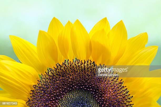 The Sunny Flower