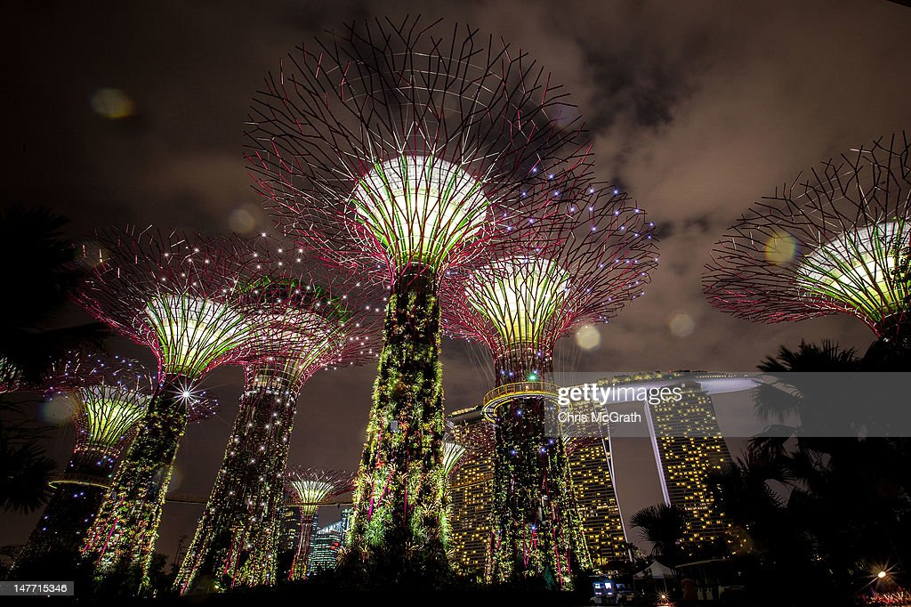 the supertree grove is illuminated as rain falls during the gardens by the bay light