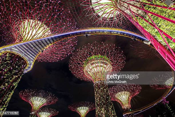 The Supertree Grove is illuminated during the Gardens by the Bay Light and Sound show on July 2 2012 in Singapore The free nightly light and sound...