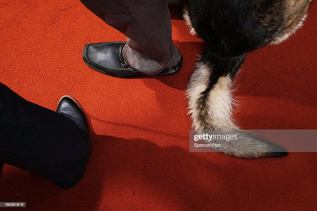 The tail of a German Shepherd lays on the floor near his owners during a news conference by the American Kennel Club to discuss the release of the club's annual list of the most popular dog breeds in the U.S., on January 30, 2013 in New York City. The club says that for the 22nd straight year the Labrador Retriever is the nation's most popular dog followed by the the German Shepherd.
