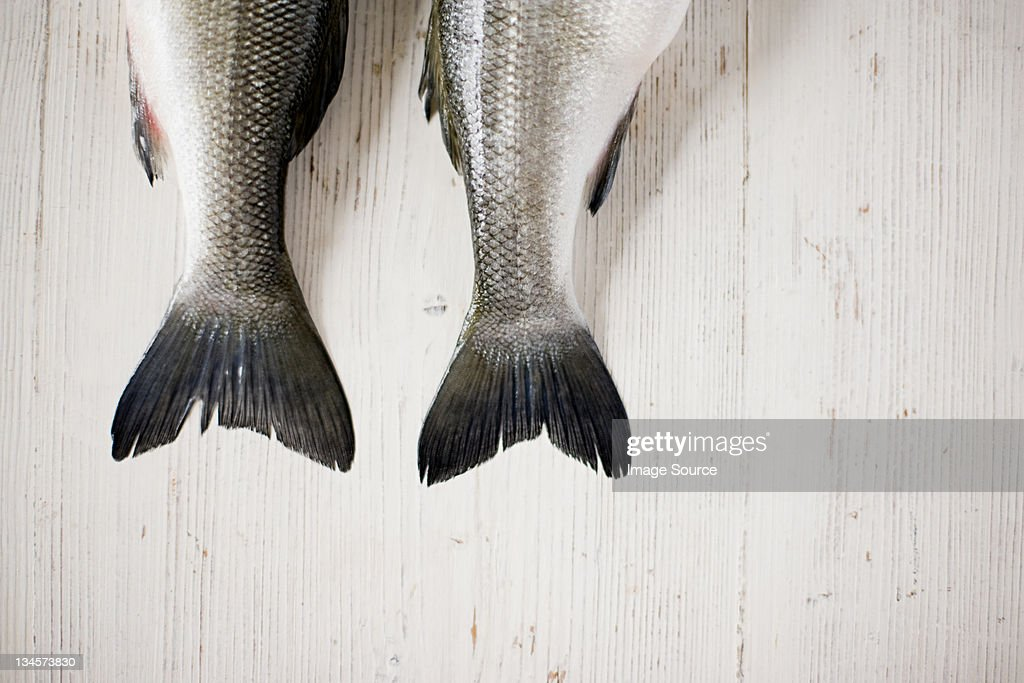 The tails of two fish side by side : Stock Photo
