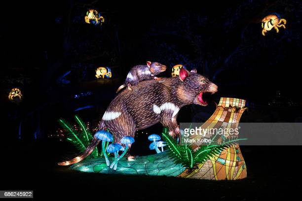 The Tasmanian Devil installation one of the giant illuminated animal sculptures on display at Taronga Zoo is seen during a media call ahead of Vivid...