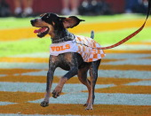 The Tennessee Volunteers mascot Smokey runs through the end zone after a score against the Georgia Bulldogs at Neyland Stadium on October 5 2013 in...