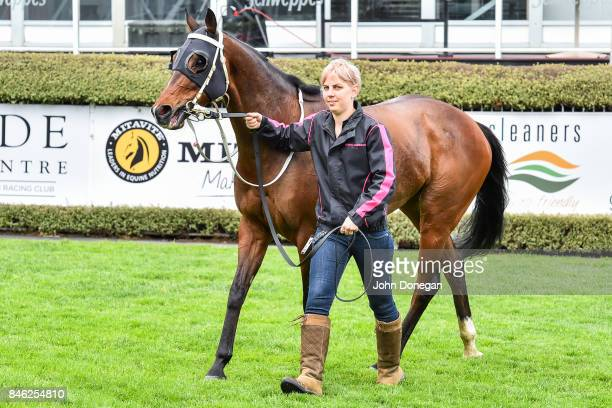 The Thug after winning the Norm Cove Handicap at Mornington Racecourse on September 13 2017 in Mornington Australia