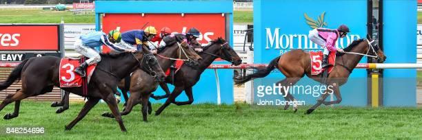 The Thug ridden by Damian Lane wins the Norm Cove Handicap at Mornington Racecourse on September 13 2017 in Mornington Australia