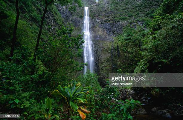 The thundering Hanakapiai Falls accessible from the Napali Coast Trail.
