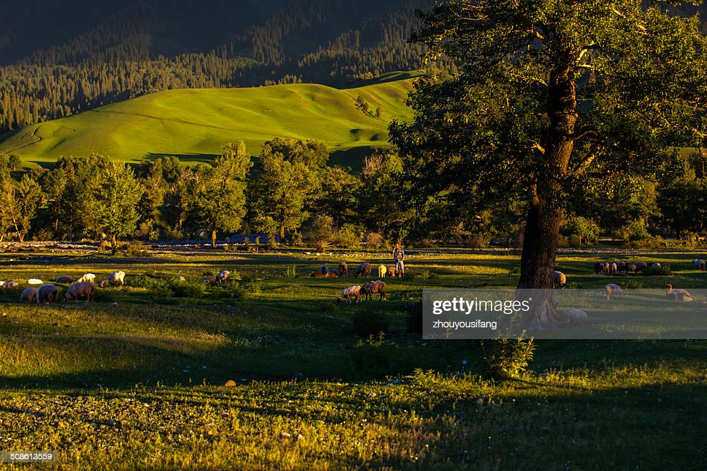 The time of dusk : Stock Photo