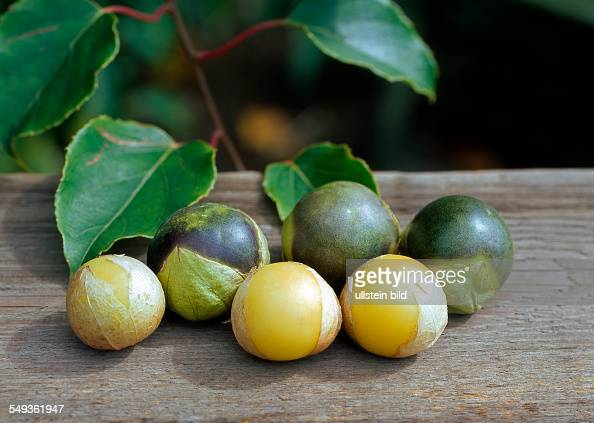 The tomatillo also known as the husk tomato or Mexican tomato