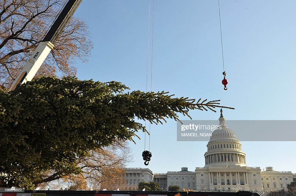 The top of the Capitol Christmas tree is seen on the back of a truck so it to before it was lifted by a crane into position on the West Lawn of the US Capitol on November 26, 2012 in Washington. The 65-foot tree is from the White River National Forest in Colorado. AFP PHOTO/Mandel NGAN