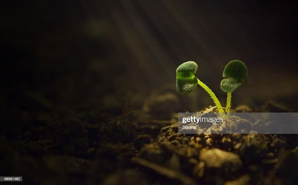 The touch of life : Stock Photo
