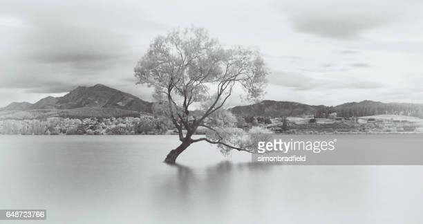 The Tree At Lake Wanaka