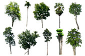 The tree is the most important thing in the world, Oxygen Production, Temperature control, Balance with nature, Beautiful, Have it all 10 with Cut-tack.
