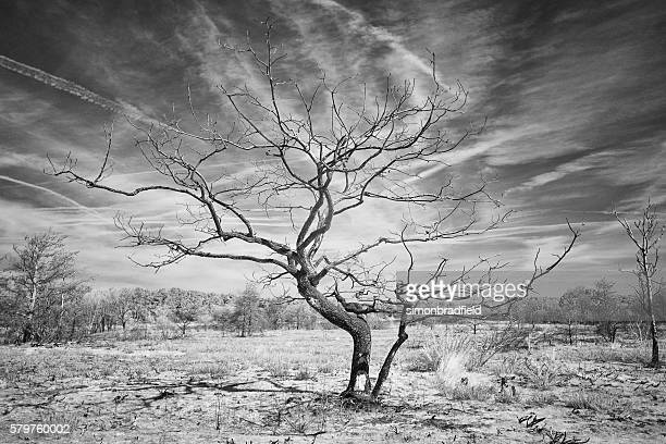 The Tree In Black And White