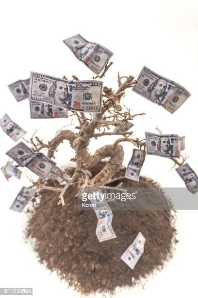 The tree of Money - Close up