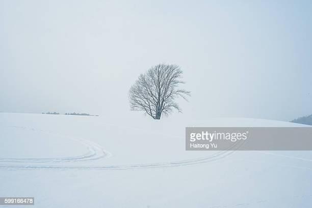 The Tree of Philosophy (哲学の木), Biei, Japan