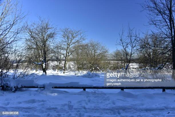 The trees and bushes in tick layer of snow behind wooden fence