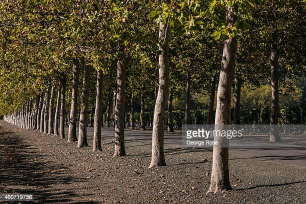 Calistoga Stock Photos And Pictures Getty Images