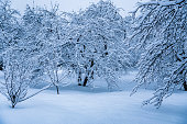 The trees in the Park after the snowfall are completely covered with snow.