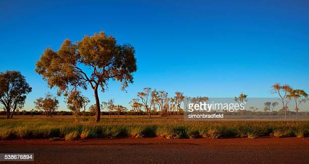 The Trees Of Uluru