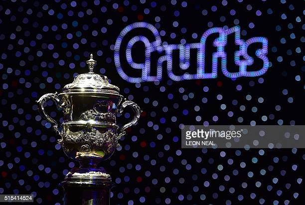 The trophy for the Best in Show category awaits the winner at the Crufts Dog Show in Birmingham in central England on March 13 2016 / AFP / Leon NEAL