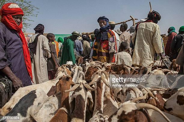 CONTENT] the Tuareg shepherd to the market of Gorom Gorom goats Sahel northern Burkina Faso