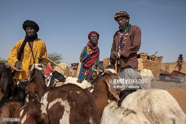 CONTENT] the Tuareg shepherds to the market of Gorom Gorom goats Sahel northern Burkina Faso