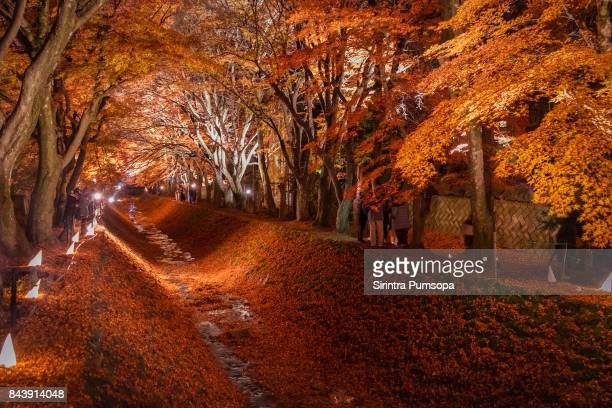 The Tunnel of Maple trees light up festival at the Momiji corridor in Lake Kawaguchi, Japan