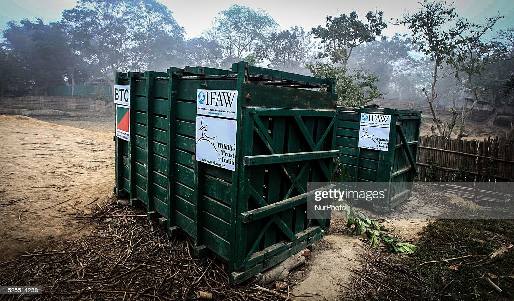 The Two hand reared Rhino are seen inside the container prior to its release at the Manas National Park from the Kaziranga National Park in Golaghat...
