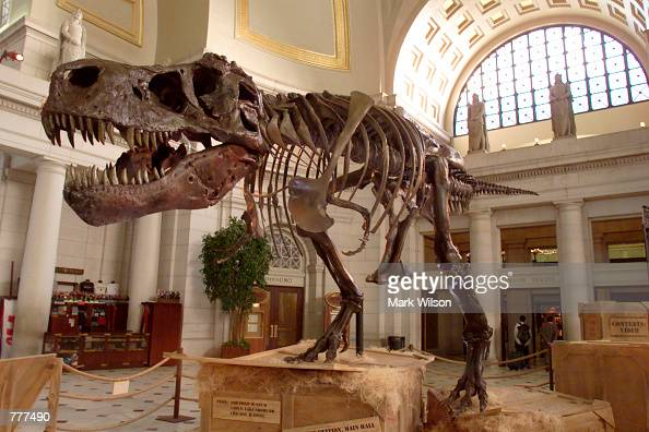 The Tyrannosaurus Rex skeleton known as Sue stands on display at Union Station June 7 2000 in Washington DC Sue the 67 millionyearold dinosaur is...