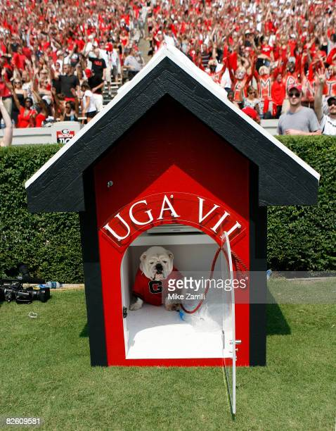The University of Georgia's new mascot UGA VII sits in his doghouse during the game between the Georgia Bulldogs and the Georgia Southern Eagles at...
